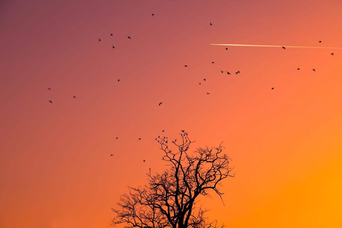Storni al tramonto - Colli di Rivalta