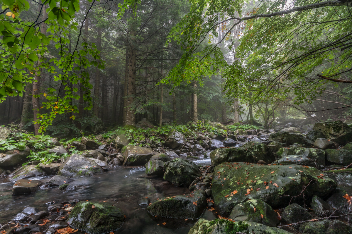 Foresta Parco dei Cento Laghi