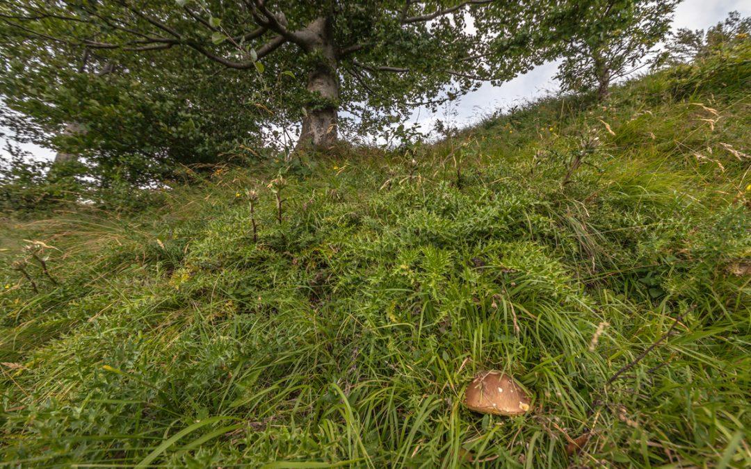 I funghi porcini dei prati dell'Appennino Tosco Emiliano