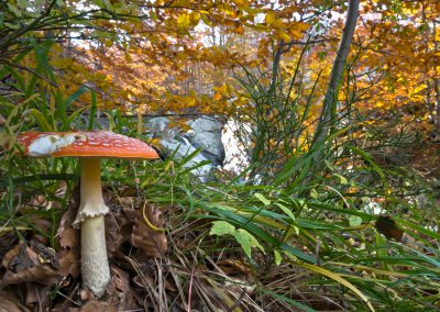 Amanita Muscaria - Parco dei Cento Laghi