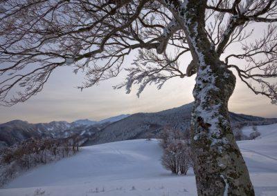 Faggio ghiacciato - Prati del Tavola - Parco dei Cento Laghi