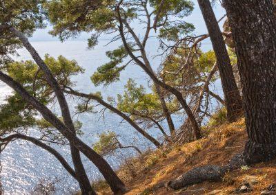 Pineta sul Mare - Portofino