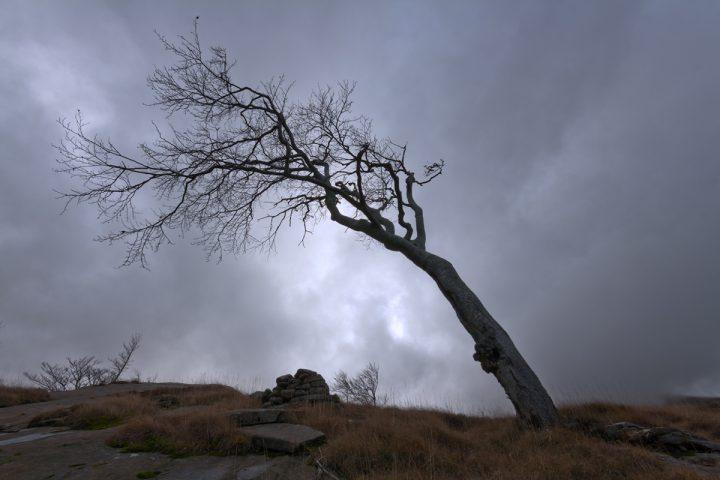 Forgiato dal Vento - Capanne di Badignana - Parco dei Cento Laghi