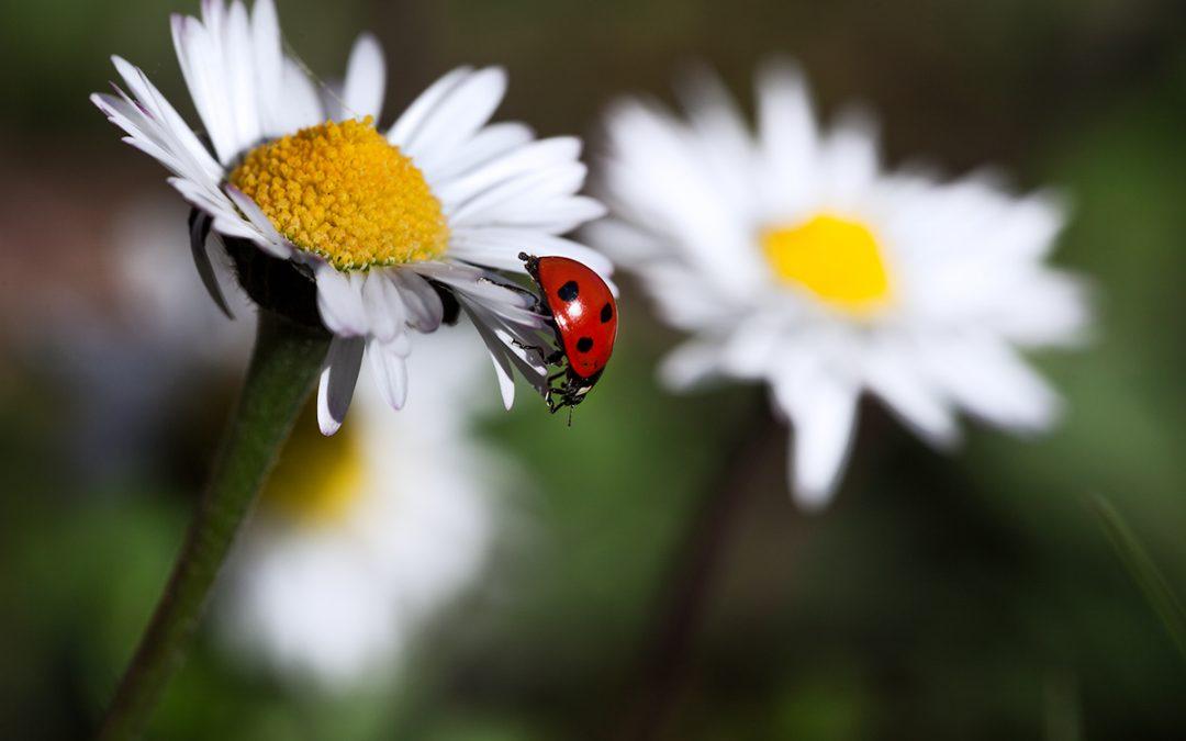 Nel pieno della Primavera tra fiori e funghi dell'appennino Tosco-Emiliano
