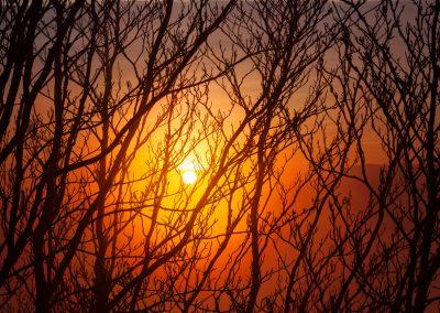 Luce del tramonto tra i faggi